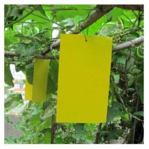 TESTAC COLOR CATCHER χρωμοπαγίδες 17×24 εκ.