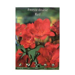 Φρέζια διπλή αρωματική κόκκινη