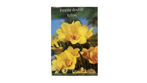 Φρέζια διπλή αρωματική κίτρινη