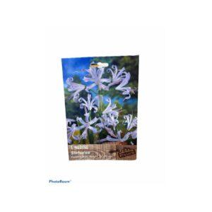 Υμενοκαλλίδα (Hymenocallis,ismene sulphur queen)
