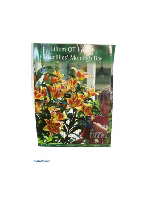Λίλιουμ αρωματικό  δενδρώδες treelilies montego bay