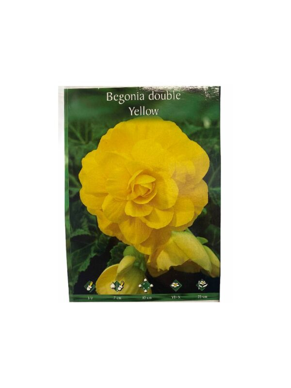 Μπιγκόνια/Βιγόνια αρωματική Begonia double yellow