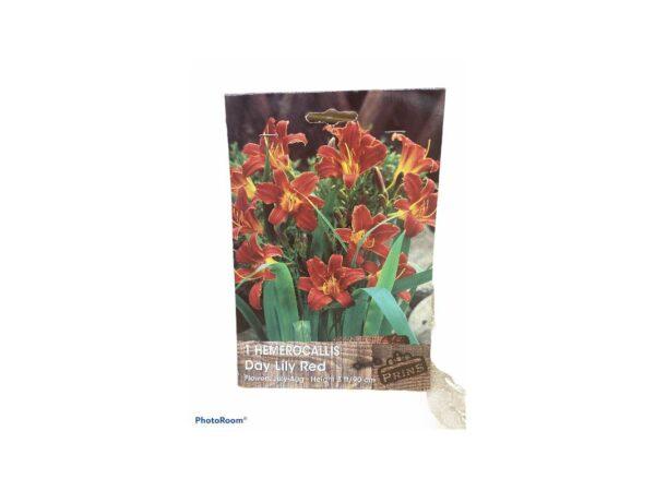 Ημεροκαλλίς Hemerocallis day lily red