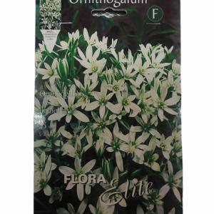 Ορνιθόγκαλο Umbellatum φάκελο 25τμχ